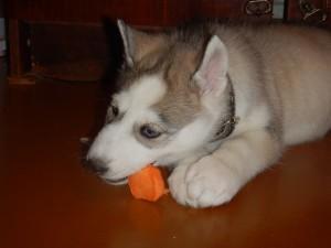 Любит грызть морковку.