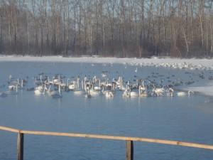 Лебединое озеро Алтай