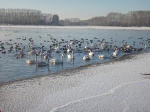 Озеро Светлое (Лебединое)