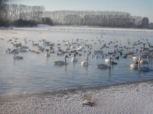 Озеро Светлое (Лебединое) на Алтае