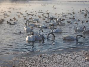Лебединое озеро, Алтай