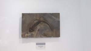 Отпечаток саламандры