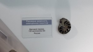 Раковина аммонита, замещенная пиритом