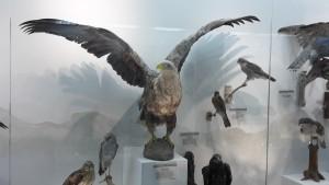 Птичка))) Вроде бы орлан